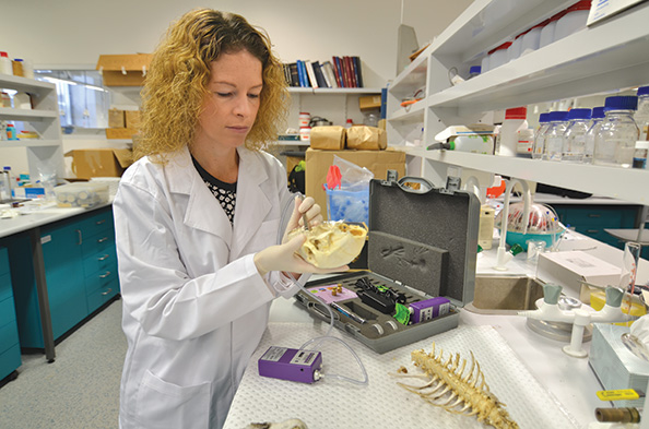 For Shari Forbes, a professor in the Centre for Forensic Science at the University of Technology in Sydney, Australia and a former Canada Research­ Chair in Decomposition Chemistry, the way in which our bodies decay after death is a compelling scientific pursuit.