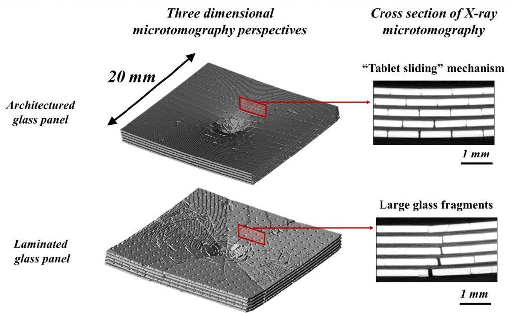 Natural Shells - Three Dimensional Microtomorgraphy Perspective